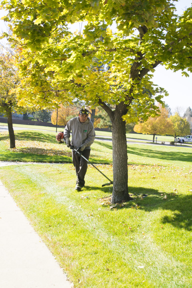 Horizon Employee Trimming Grass Around the Base of A Tree